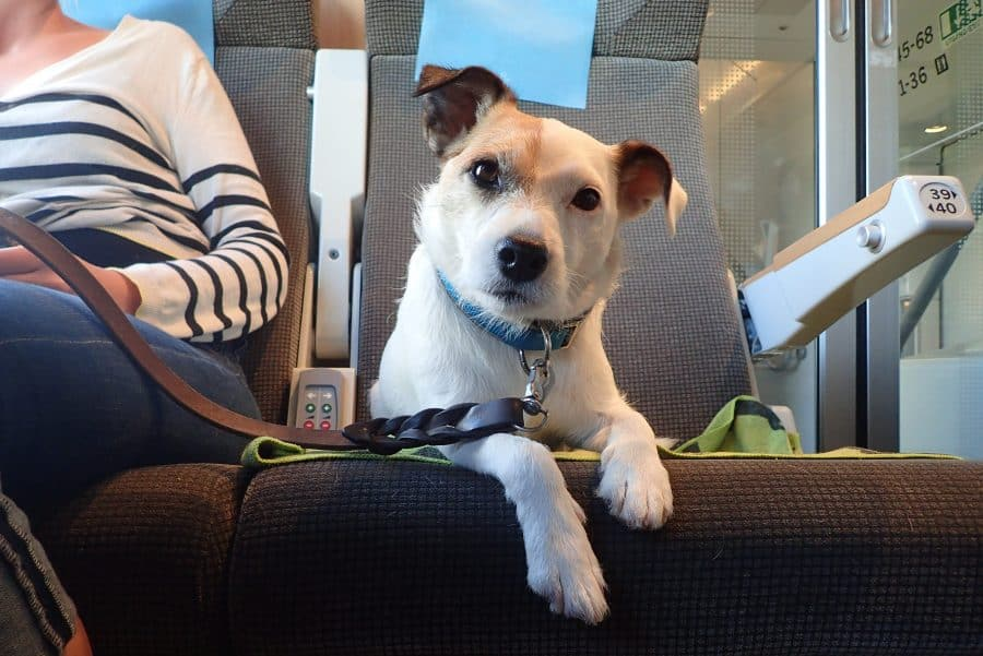 Vårdhundar får personer att må bättre