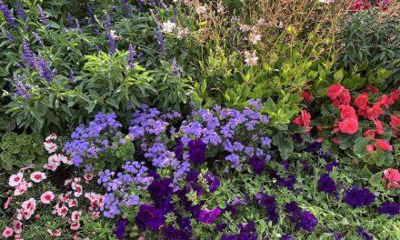 Sommar – gemenskap eller utanförskap?