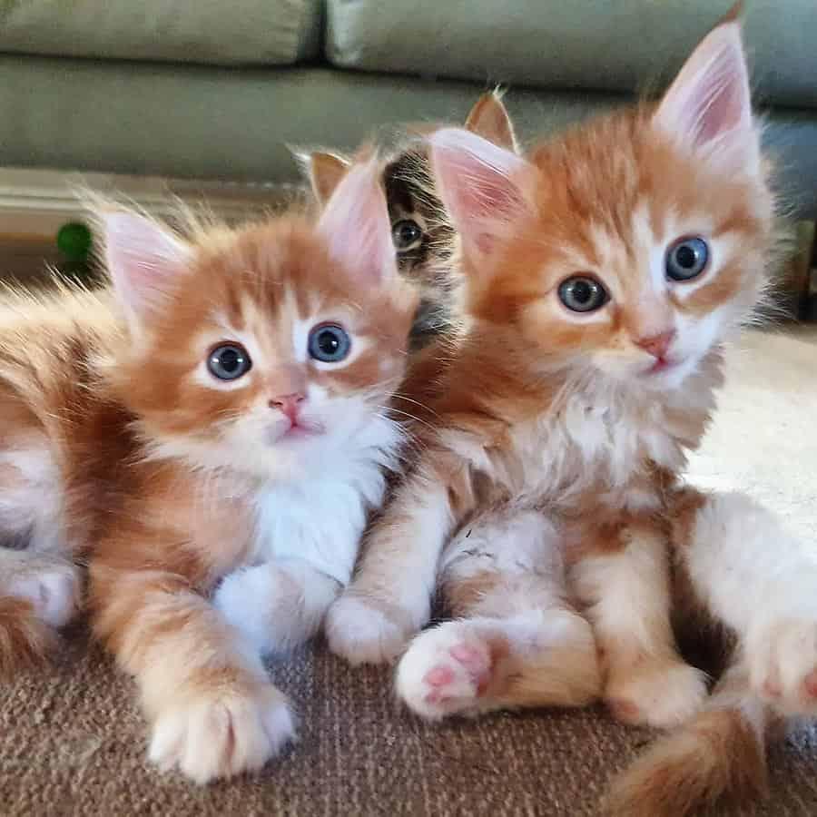 Närbild på tre katter