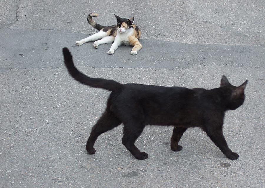 Internationella kattdagen 8 augusti