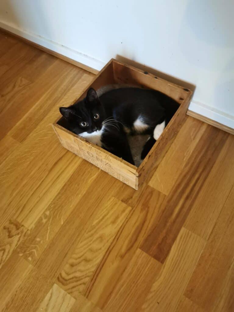 Katt i sin kattsäng