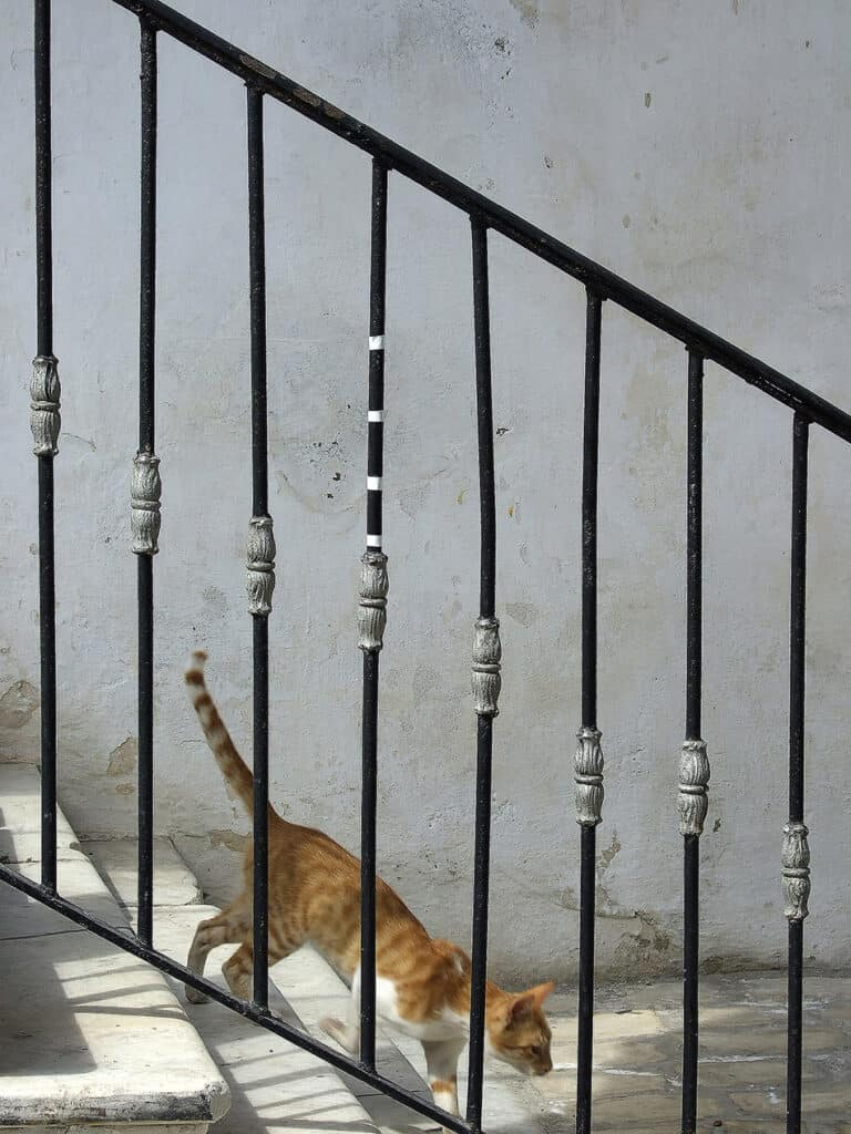 Katt i trappa i Aten