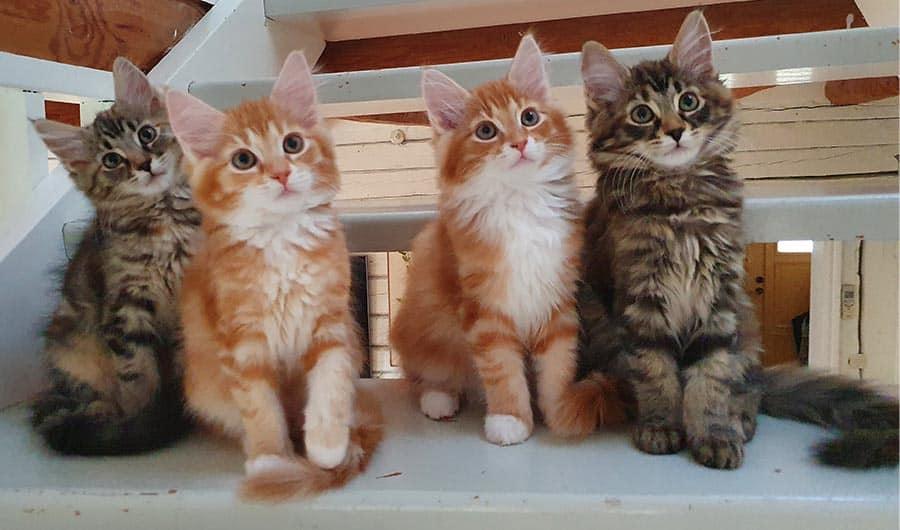 Fyra kattungar som sitter i en trappa