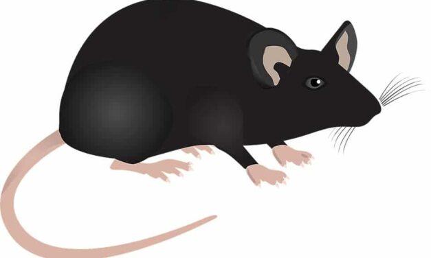 Ny studie på möss om ECT och Alzheimers-protein